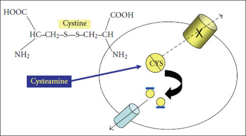 Cystine-Depleting Effect of Cysteamine