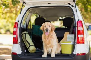 Best Vehicle in 2019 For Dog Owners - Kidney Car